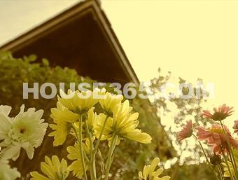 景枫你山视频图